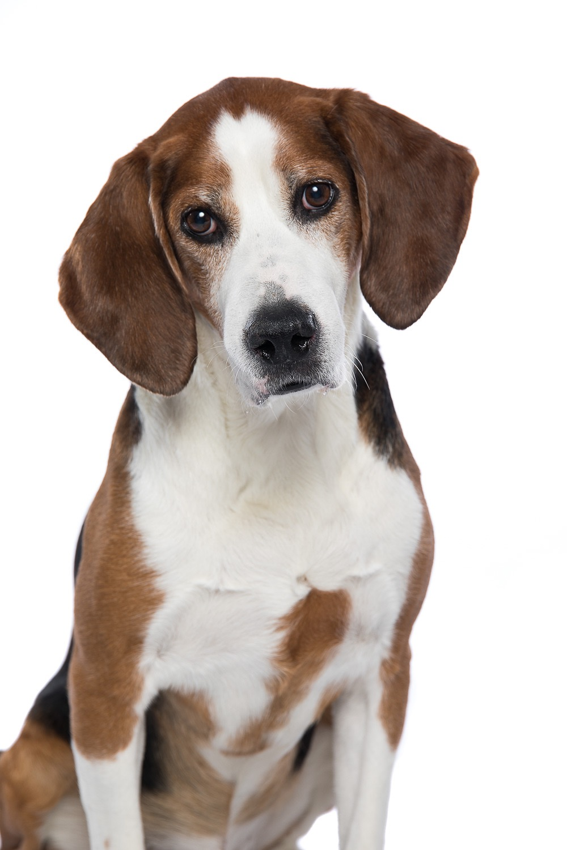 hund-hundefotograf-hundefotografering-fotograf-studiohodne-hodne-5804.jpg