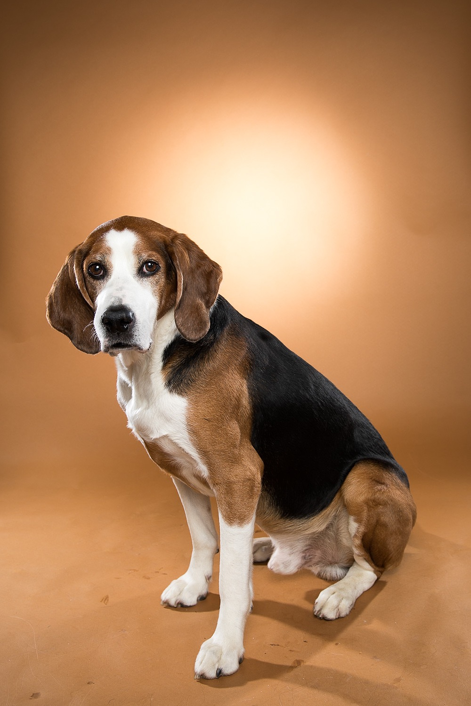 hund-hundefotograf-hundefotografering-fotograf-studiohodne-hodne-5888.jpg