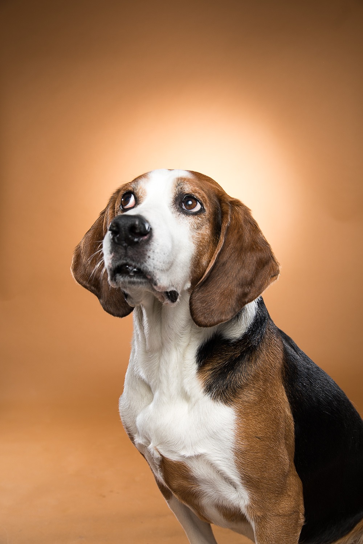 hund-hundefotograf-hundefotografering-fotograf-studiohodne-hodne-5913.jpg