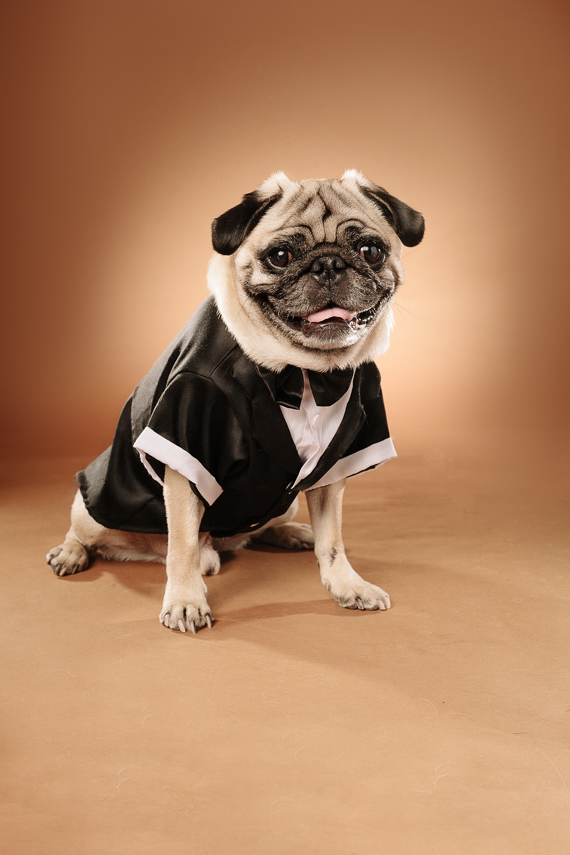 hund-hundefotograf-hundefotografering-fotograf-studiohodne-hodne--15-kopi.jpg