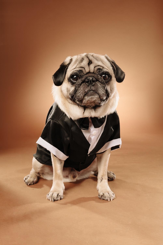 hund-hundefotograf-hundefotografering-fotograf-studiohodne-hodne--16-kopi.jpg