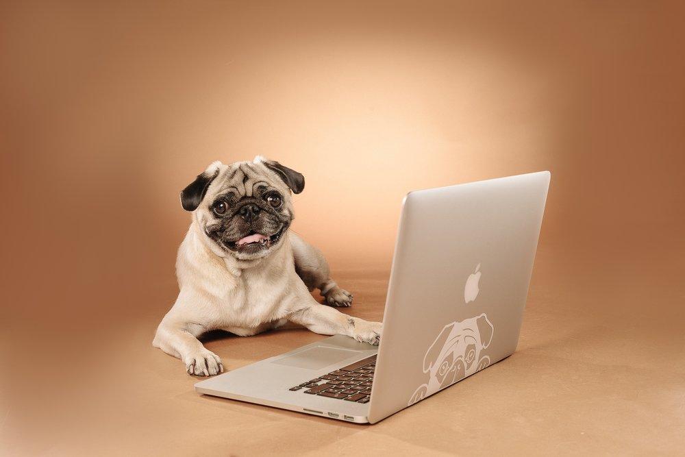 hund-hundefotograf-hundefotografering-fotograf-studiohodne-hodne--14-kopi.jpg