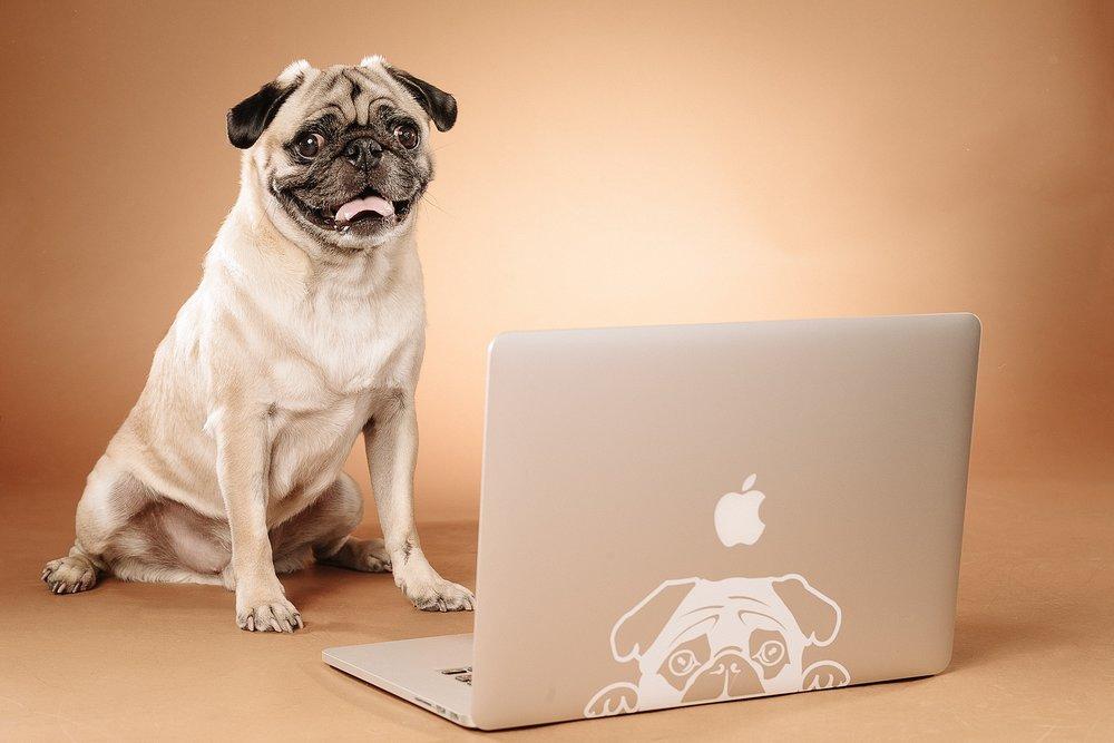 hund-hundefotograf-hundefotografering-fotograf-studiohodne-hodne--13-kopi.jpg