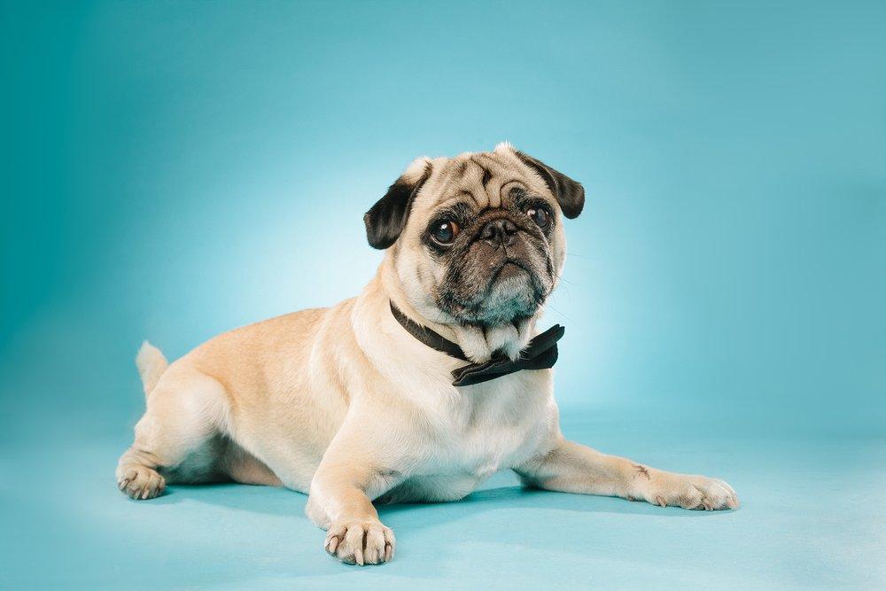 hund-hundefotograf-hundefotografering-fotograf-studiohodne-hodne--11-kopi.jpg