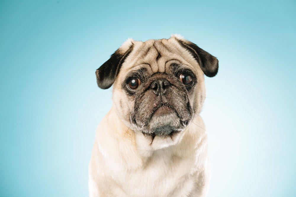 hund-hundefotograf-hundefotografering-fotograf-studiohodne-hodne--9-kopi 2.jpg