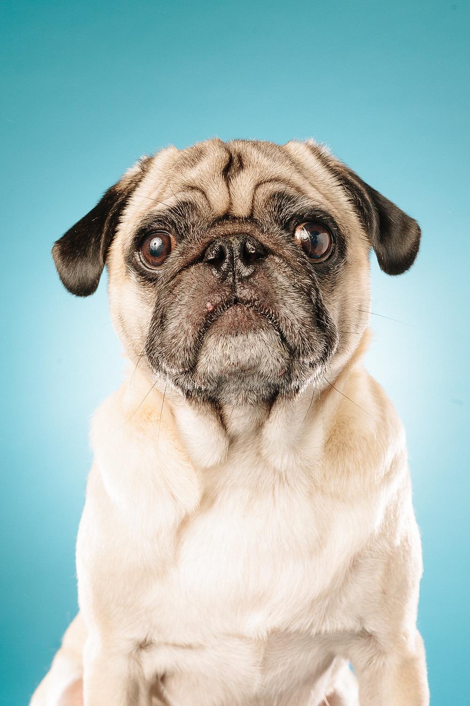 hund-hundefotograf-hundefotografering-fotograf-studiohodne-hodne--8-kopi 2.jpg