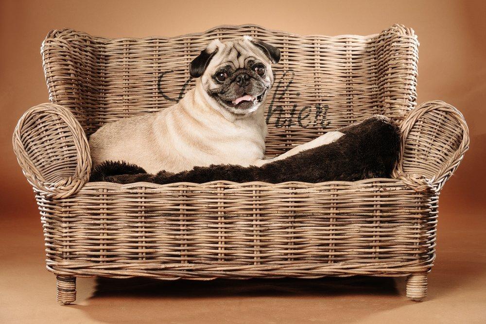 hund-hundefotograf-hundefotografering-fotograf-studiohodne-hodne--12.jpg