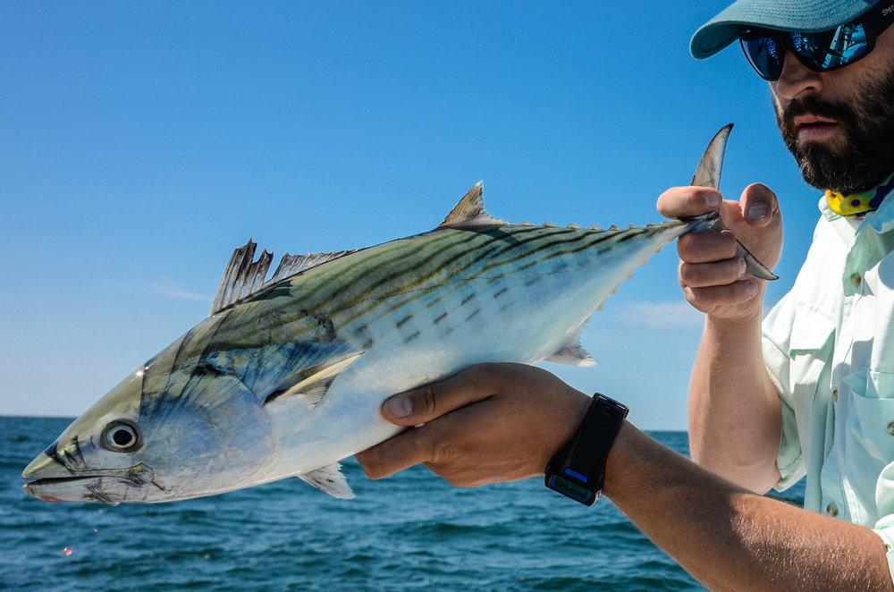 fishnate.jpg