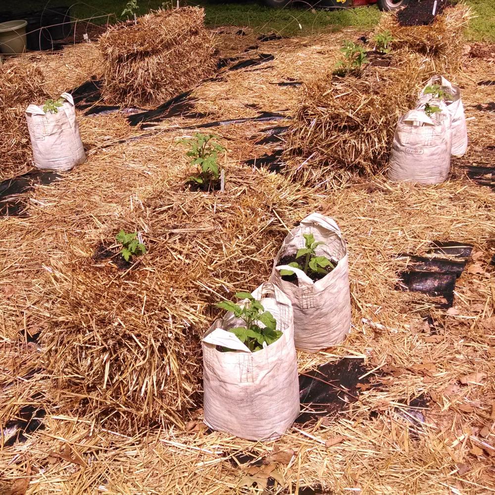 Craig LeHoullier | Growing Vegetables in Straw Bales