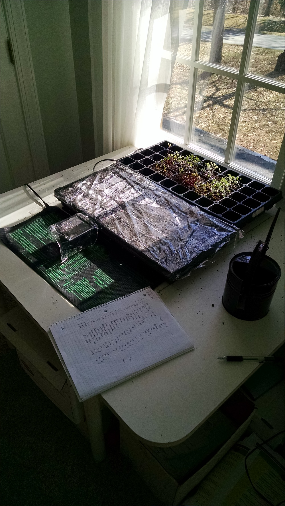 Feb 11 seedlings