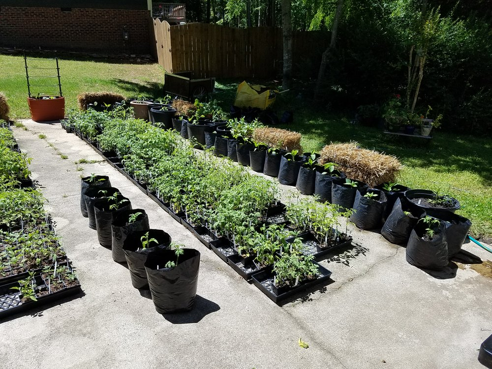 Driveway garden beginning to take shape