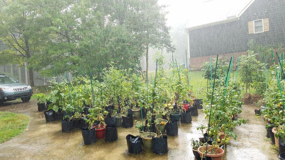 Rain!