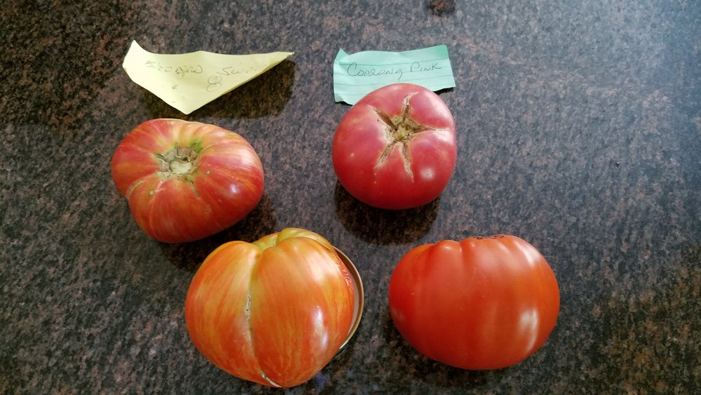 The desired Firebird Sweet, above left, and desired Coorong Pink, above right, from a friend's garden
