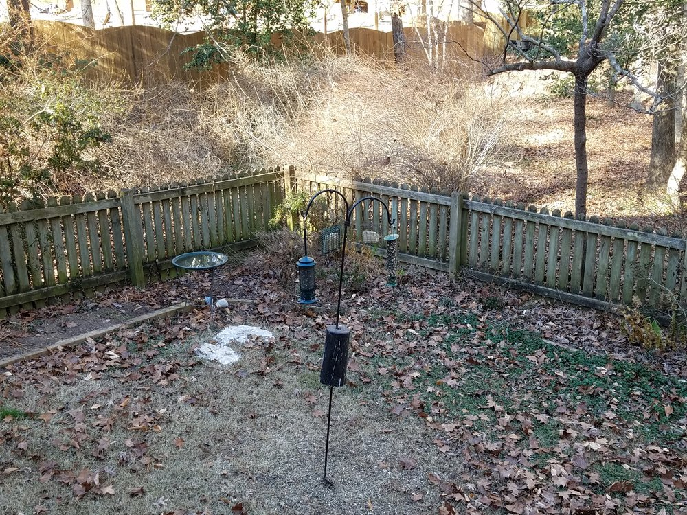 Our frigid back yard this morning, after filling the feeders and bird bath