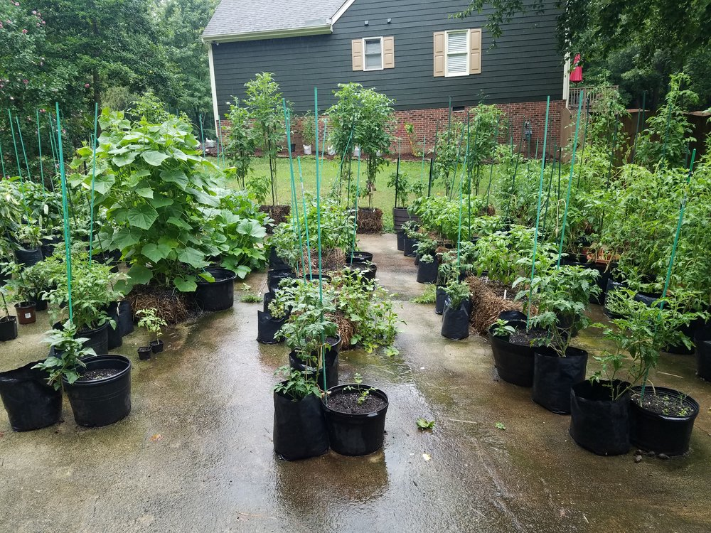 View of the driveway garden on a cool, rainy July 7 morning