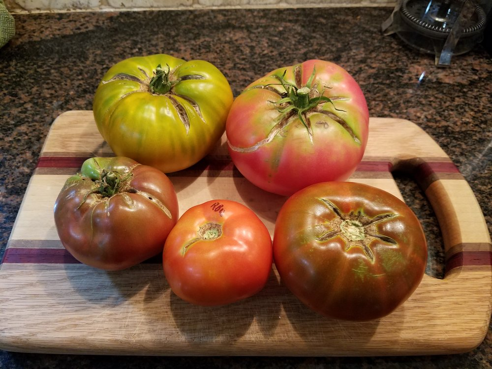 Cherokee Green, Polish, Cherokee Chocolate, Red Brandywine and Cherokee Purple - clockwise from upper left - green, pink, brown, red and purple tomatoes!