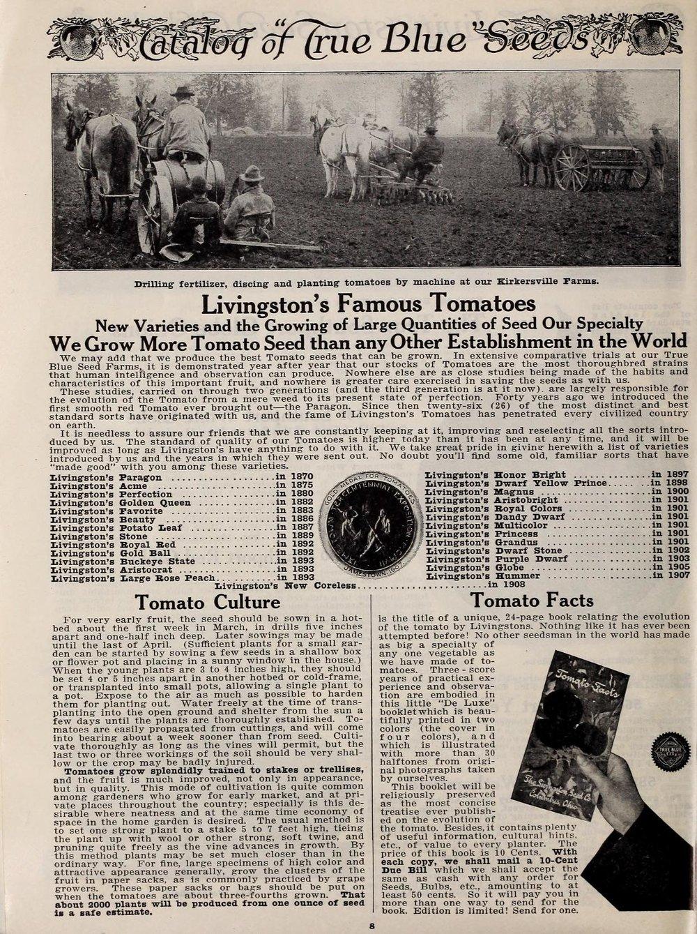 livingston 1911 tomatoes.jpg