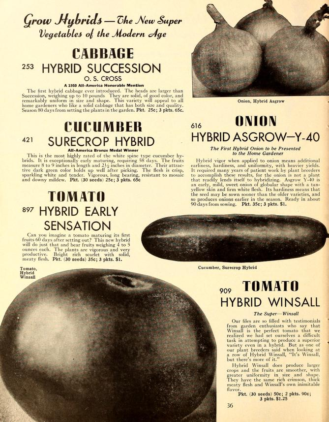 Page from a 1952 Henderson catalog featuring two new hybrid varieties.