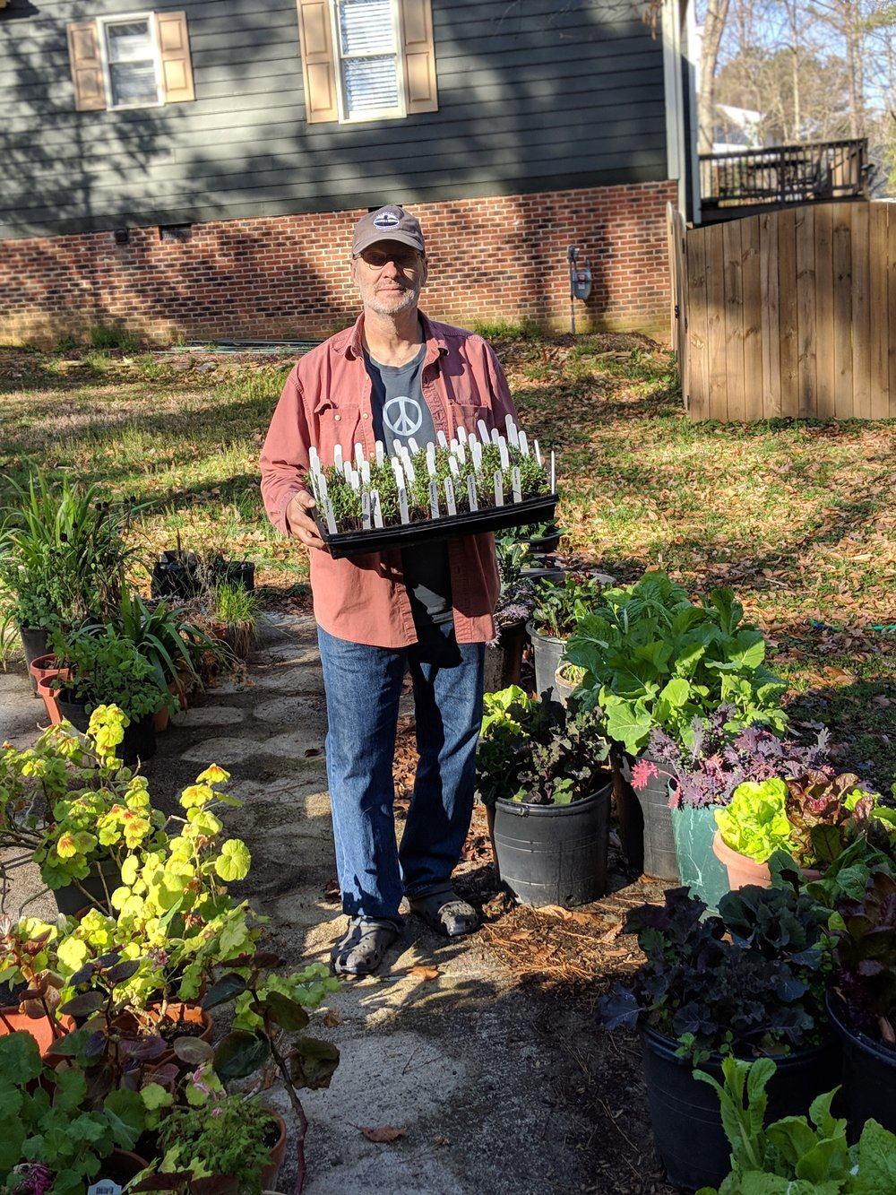 Moving some seedlings among the greens and other plants