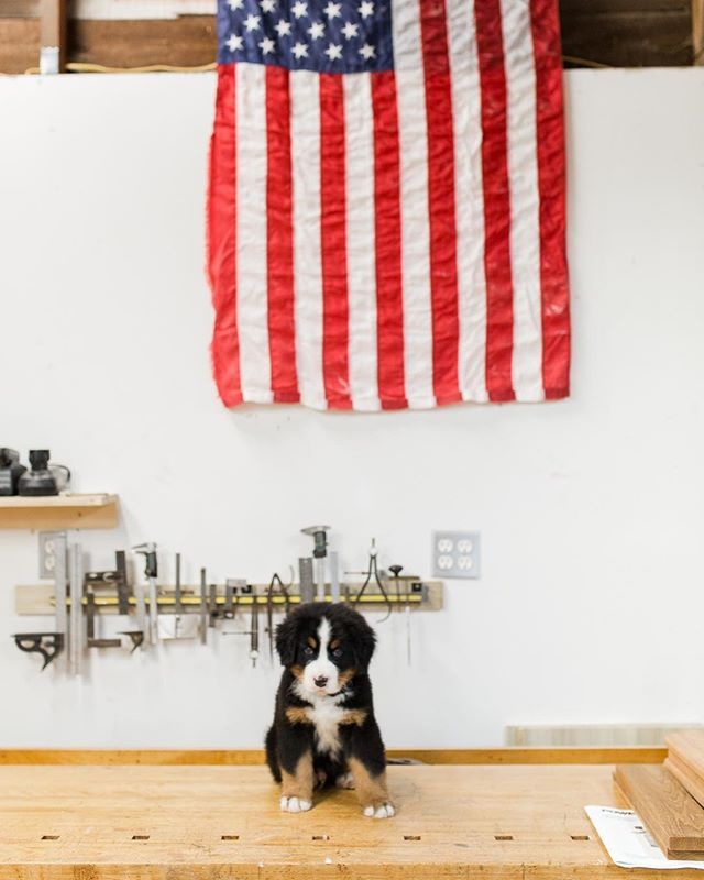 "Welcoming our newest shop dog 🐶 ""Whiskey"" to the AC Grayling crew!! Ready to tackle 2019 projects!! #acgraylingfurniture #shopdog #whiskeytheberner #customfurnituredesign #builtinnewengland #americanmade #patrioticpuppy"