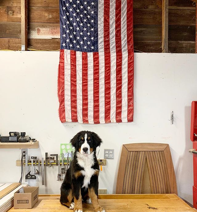 Growing like a weed + gaining experience with rolling in saw dust 🐾🐶 #shopdog #whiskeytheberner #acgraylingfurniture #americanmade #bernesepuppy #furnitureshop #madeinrhodeisland