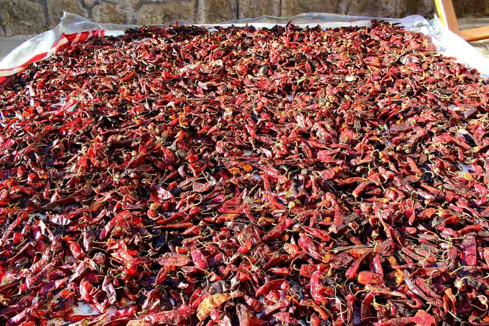 Drying Berbere Peppers