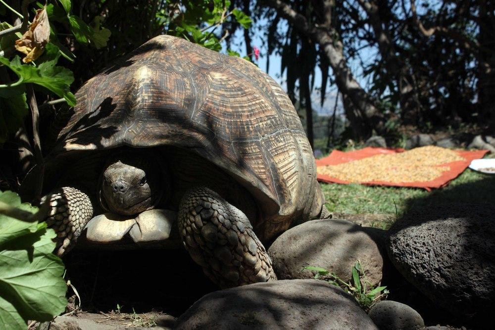 Tortoise Guarding Shiro