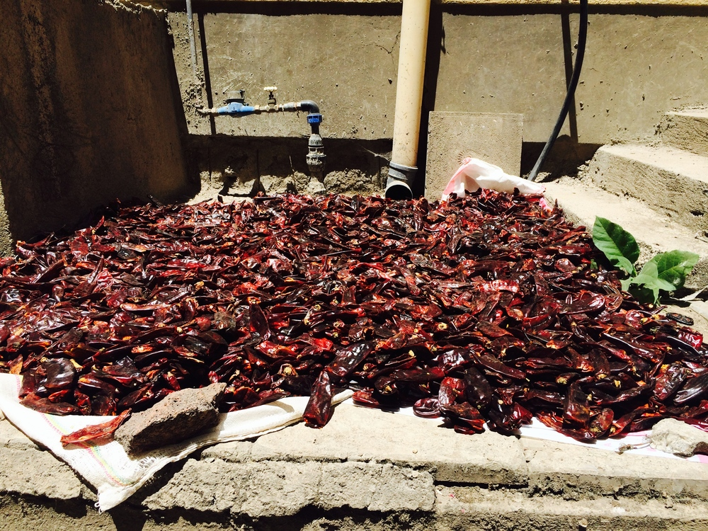 Berbere Peppers Drying in our Apartment Complex
