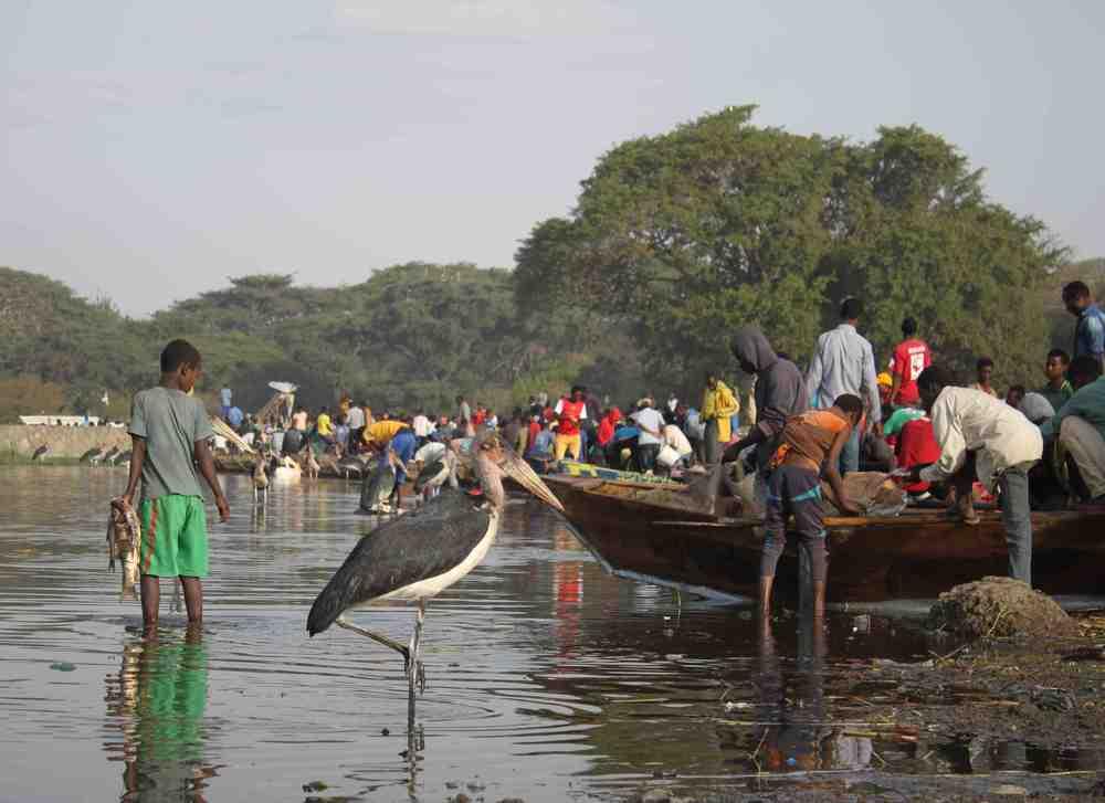 Awassa Fish Market
