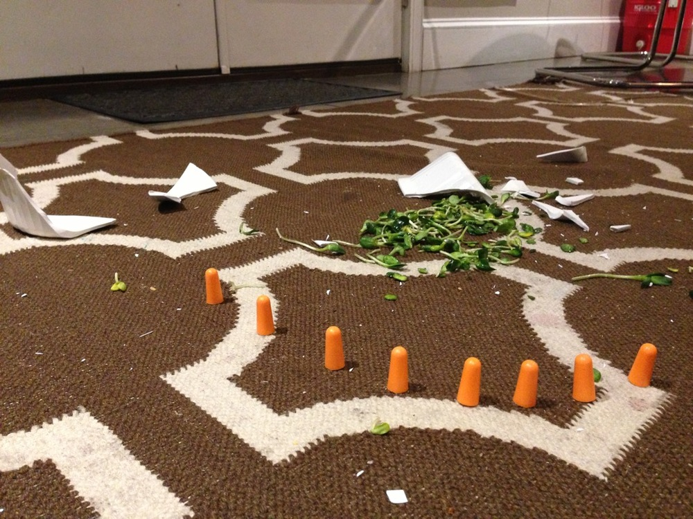 Domestic Emergency, Just Before Bedtime. Site specific installation,ceramic, sunflower shoots, foam ear plugs. 2015