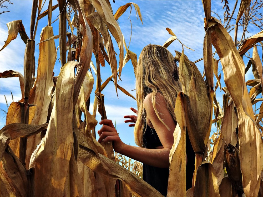 in the cornfield.jpg