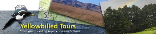 yellowbilled tours.jpg