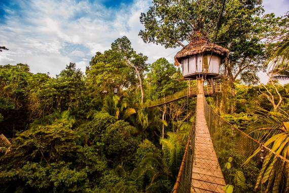 Treehouse Lodge - Canopy Walkway