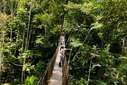 Delfin I - Canopy Walkway - Birding & Amazon Canopy Walkways u2014 Peru North