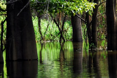 Pacaya-Samiria - Flooded Forest
