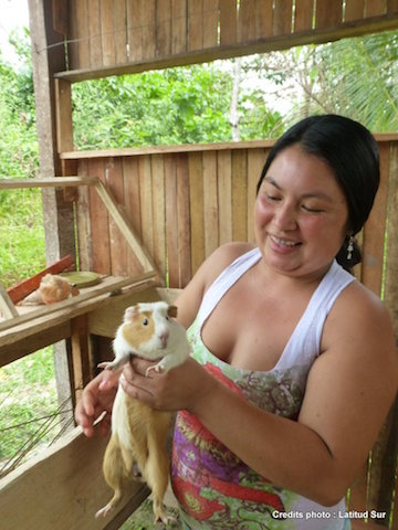 Selva Viva - Amazon Sustainable Agriculture Project - Guinea Pigs