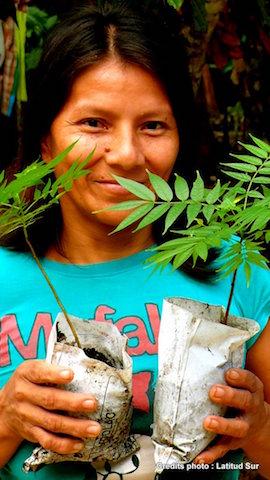 Selva Viva - Reforestation Project - Nursery