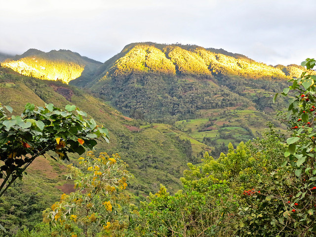 The habitat of the Marvellous Spatuletail, in the valley of the Utcubamba River.