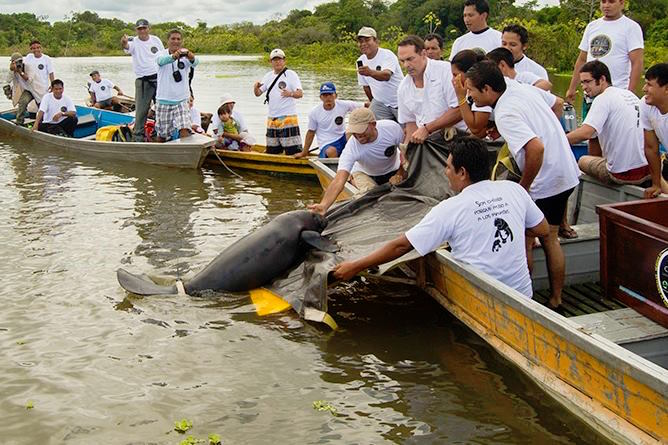 Manatee Conservation Programme at Tahuayo Lodge