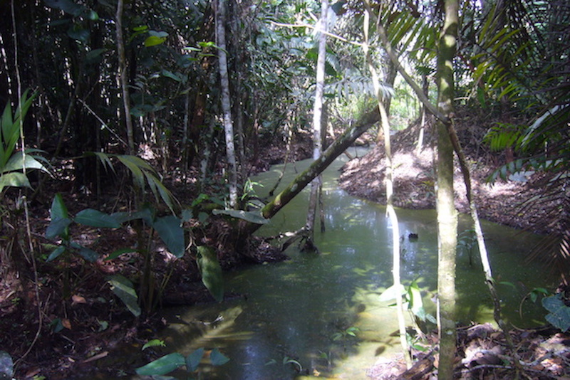 Juningue Private Conservation Area