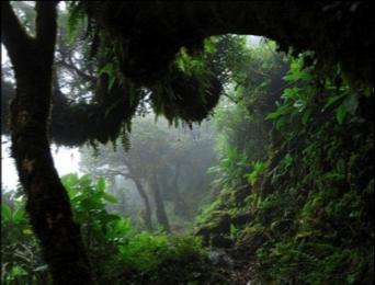 Southern Ecuador - Podocarpus National Park.png