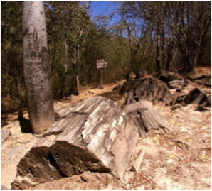 Southern Ecuador - Puyango Petrified Forest.png