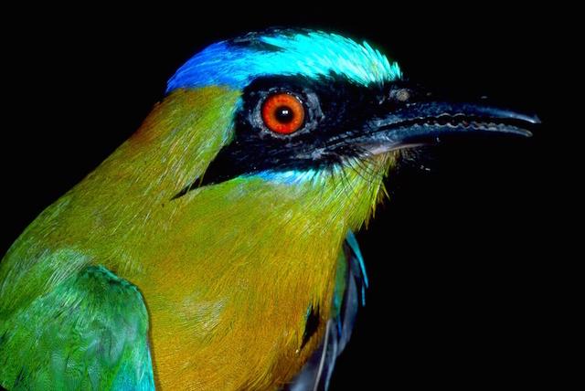 Northern Peru Birding Route - Abra Patricia.jpg