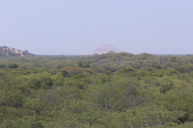 Pomac Dry Forest - Huacas in Distance.jpeg
