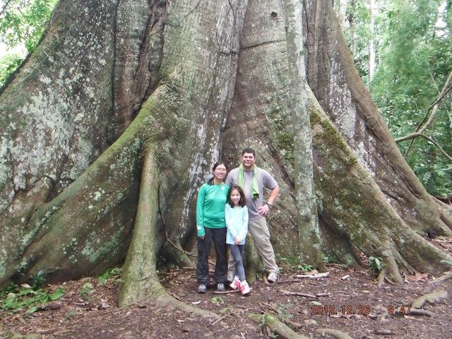 Amazon River Cruises - Ceiba Tree & Family.jpeg