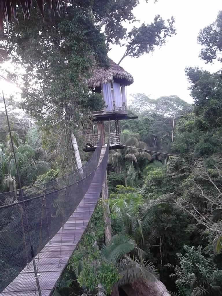 Anne Askew - Treehouse Lodge - Canopy Walkways.JPG