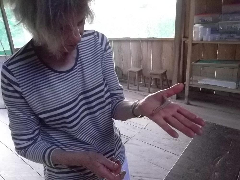 Anne Askew - Treehouse Lodge - Caterpillar.JPG