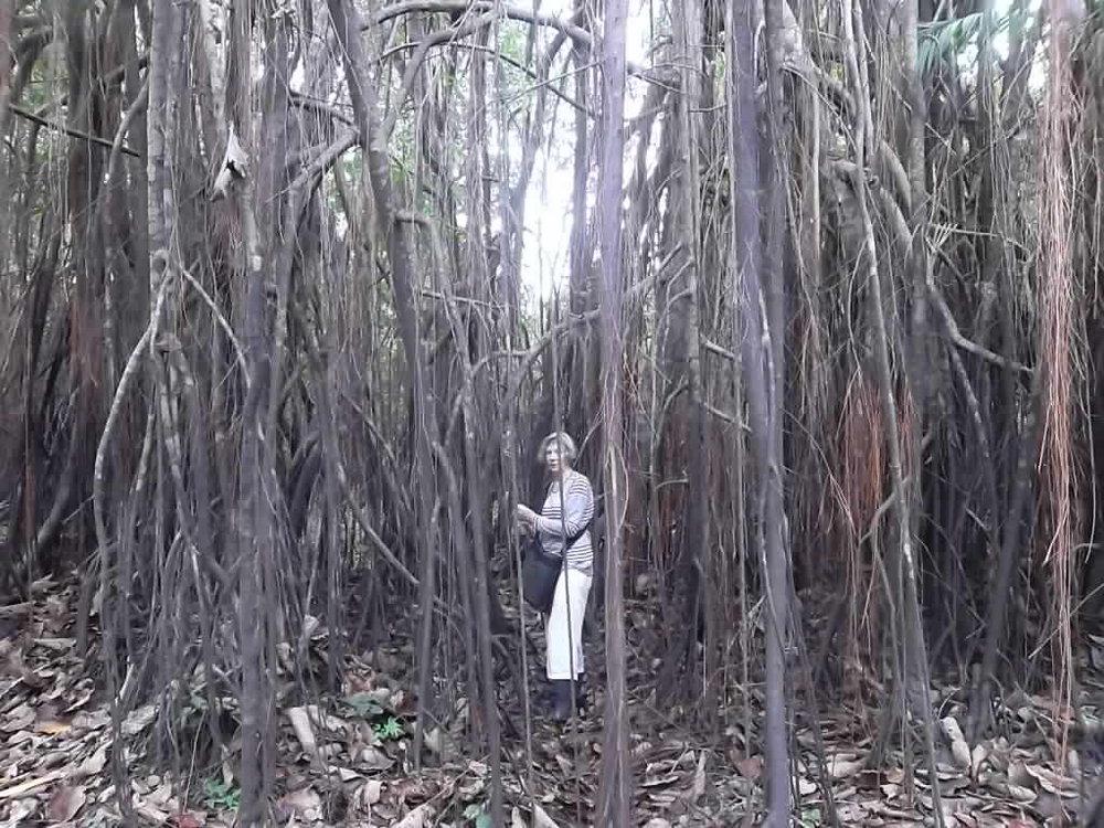 Anne Askew - Treehouse Lodge - Mangroves.JPG