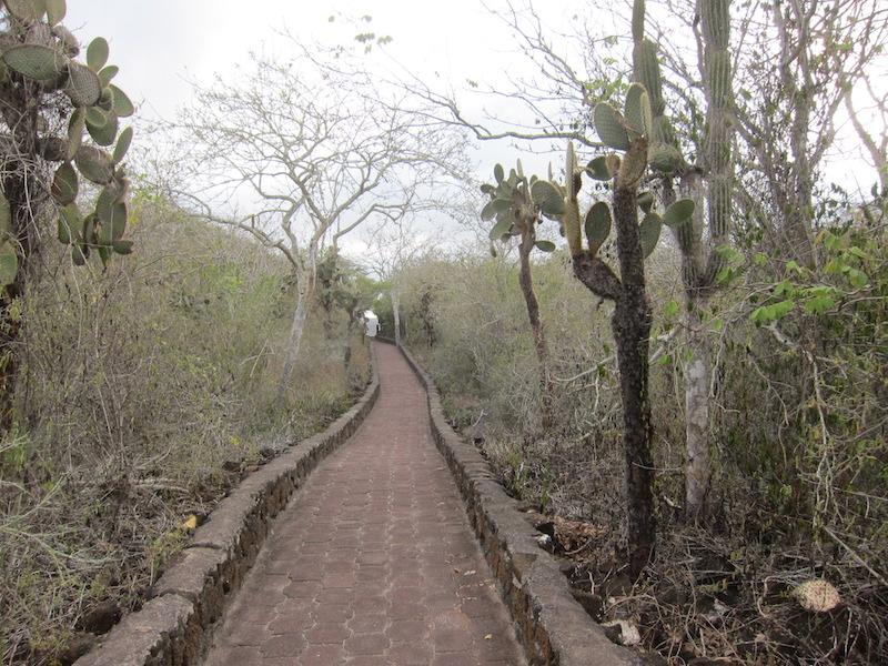 Galapagos Islands 5D - Island Path.jpg