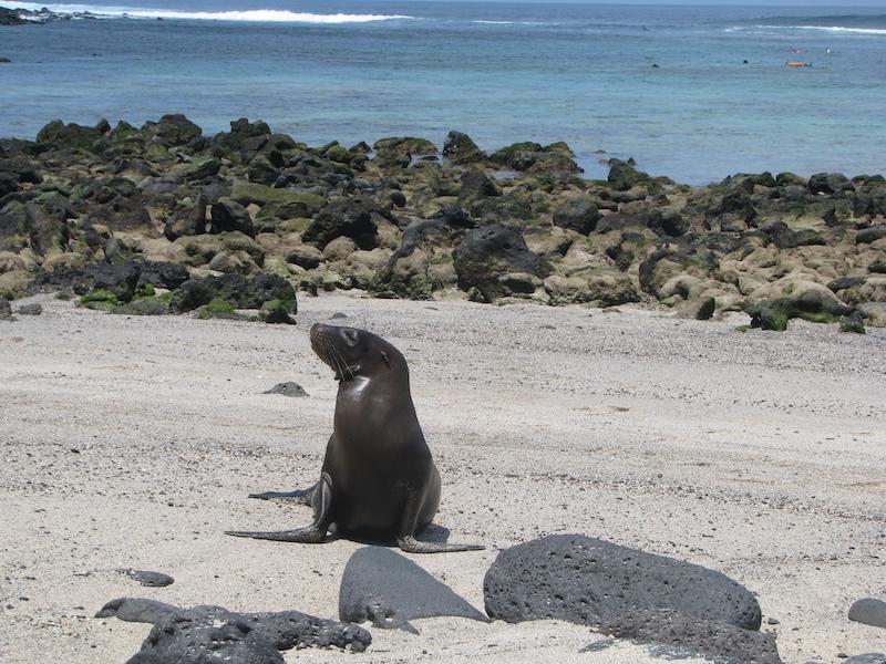 Galapagos Islands 5D - Sea Lion.jpg